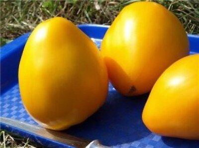 Seeds Tomato Bulls OxHeart Gold Yellow Giant Vegetable Organic Russian Ukraine