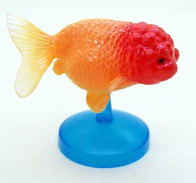 Goldfish heritage Figure Collection Red Ranchu Goldfish US seller New
