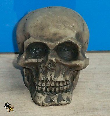Aquarium Ornament Skull Vivarium Realistic Decoration Fish Tank