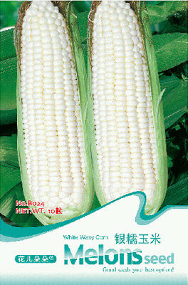 Original Package 10 Corn Seeds White Waxy Corn Zea Mays Vegetable Seed B024