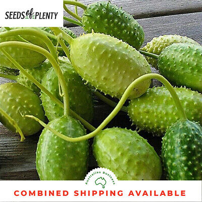 CUCUMBER - West Indian Gerkin (100 Seeds) Heritage Variety GREAT FOR PICKLING
