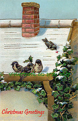 Vintage~Birds on Snowy Roof w Holly~Berries~English Ivy~NEW Christmas Note Cards