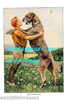 1919 Irish Wolfhound Dog Stands Over Boy~NEW Large Note Cards