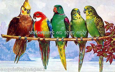 Antique Colorful Art~Cockatiel~Parakeets~Conure~Lovebird~NEW Large Note Cards