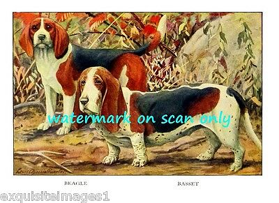 1919 ~Basset Hound & Beagle Dogs~ NEW Large Note Cards