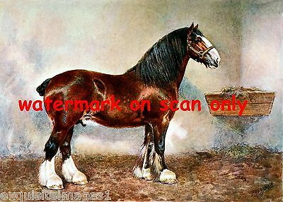 1911 Artwork~ Clydesdale Stallion Horse~Prince of Albion~NEW Large Note Cards