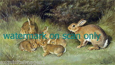 1902 F.Paton~Family of Brown Bunny Rabbits in Grasses~NEW Large Note Cards