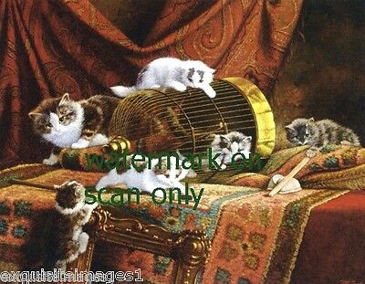 c1899 Kitten Kittens Cat Cats Play on Rugs and in Birdcage~ NEW Large Note Cards