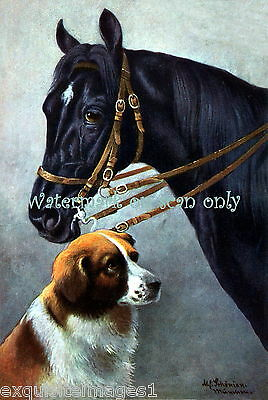 Vintage Art~Saint Bernard Dog w Black Horse~Schonian~NEW Large Note Cards