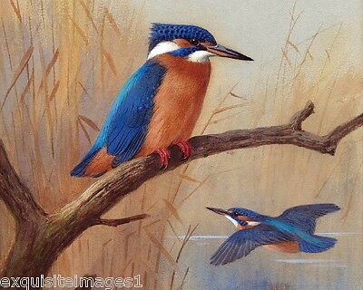 c1900 Thorburn~Pair of Exquisitely Drawn Kingfisher Birds~NEW Large Note Cards