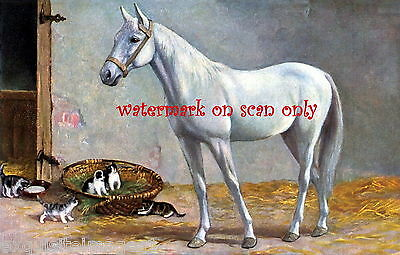 Vintage Artwork~White Horse in Stable with Kittens~ NEW Large Note Cards