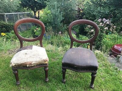 2 Balloon Back Antique Horse Hair Dining Chairs For Restoration Tlc Upholstery