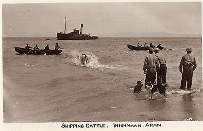 SHIPPING CATTLE INISHMAAN ARAN GALWAY IRELAND RP IRISH POSTCARD by MASON No.2283