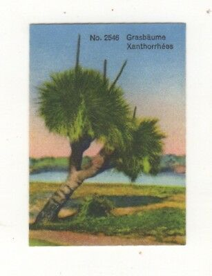 Lindt Chocolate Australiana Card: Grass trees