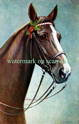 Vintg Art~Brown Horse~White Blaze~Red Flower~Evergreen in Bridle~NEW Note Cards