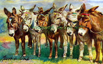 """Vintage Art """"Just a Line"""" of Cute Burros~Donkeys~Colorful~NEW Large Note Cards"""