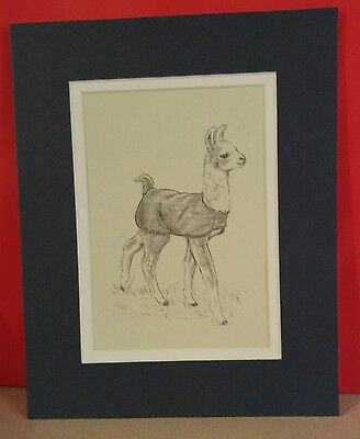 Llama Art Print From Pencil Drawing By Dian Pierce- Double Mat-Cria