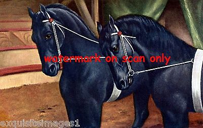 Vintage Artwork~Elegant Black Circus Show Horses~ NEW Large Note Cards
