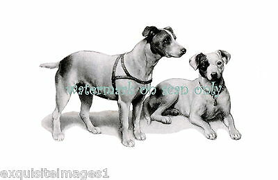 1902 JACK RUSSELL TERRIER DOGS~NEW Large Note Cards