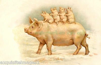 Vintage Art~Cute Pig w Piglets~ NEW Large Note Cards