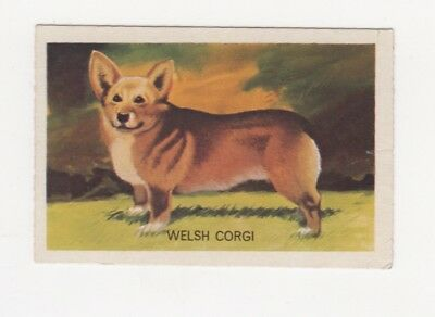 Australian Dog Trade card - Welsh Corgi