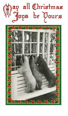 Vintage Christmas Art~Three Skye Terrier Dog Dogs Look in Window~ NEW Note Cards
