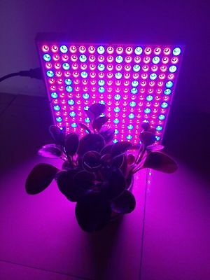 Panel Led Cultivo Plantas Interior Grow Hidroponico Rojo Y Azul  Leds