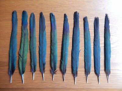 """10 Magpie Center  Tail Feathers   8.5"""" - 9.5""""  Fly Tying Arts Crafts"""