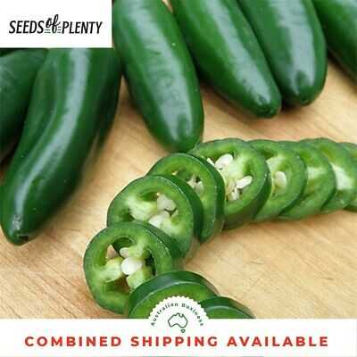 CHILLI - Jalapeno (100 Seeds) HIGHLY PRODUCTIVE Great for Pots HEIRLOOM Bulk