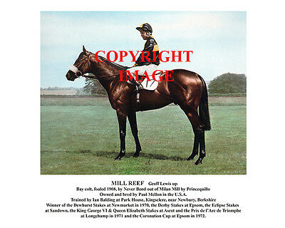 MILL REEF and Geoff Lewis: 1971 Derby winners 10x8 colour, fully captioned
