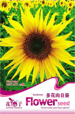 Original Package 20 Sunflower Seeds Helianthus Annus Flower Garden Seeds A034