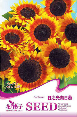 Original Package 20 Sunflower Seeds Sunflower Helianthus Annuus Flower Seed A141