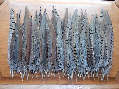 """50+ Cock Pheasant Tail Feathers 6.1/2"""" - 11.1/2"""" Fly Tying Arts Crafts"""