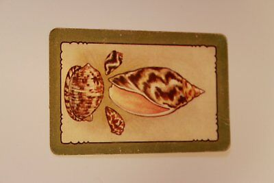 Swap Card 4 shells on cream background with green border