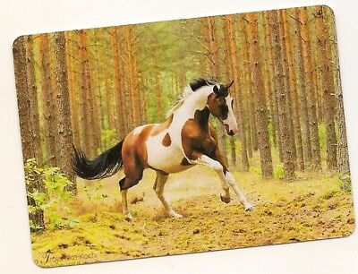 Single Swap Playing Card Pinto Paint Piebald Horse  Horses In Forest