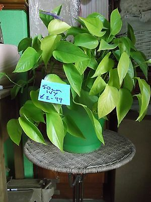 Assortment of plants with pots all different prices and sizes check the photo's