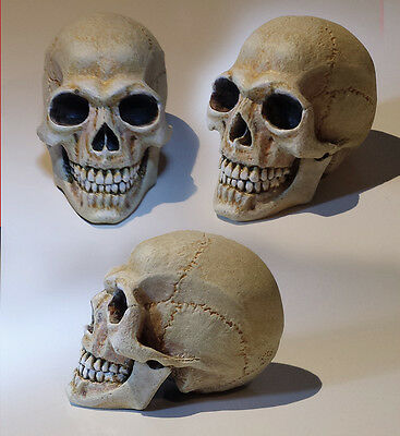 1:4 Scale Human Skull hand painted