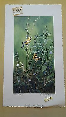 Michael Budden Printers Proof Print American Goldfinch Handmade Paper