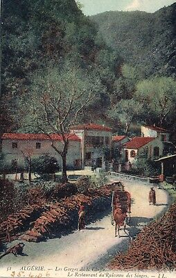 ALGERIA (Levy Brothers,1906 Postcard)