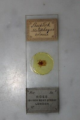 "Antique Victorian Microscope Slide Entire Specimen ""sheeptick"" By Ross"