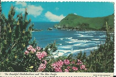 """Vintage Postcard - Rhododendrons on the Pacific Ocean - 1978 - 6"""" x 4"""""""