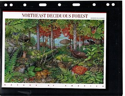 United States mnh pane 10 (Northeast Deciduous Forest)