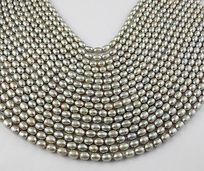 """5 Strands Natural Freshwater Grey Pearl Smooth Gemstone Oval 5x6-5x7mm 15"""" Long"""