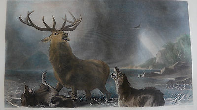Edwin Landseer - The stag at bay - Stahlstich, ca. 1890