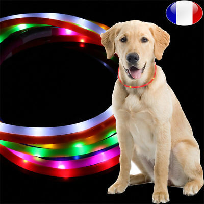 Collier Chien LED Lumineux Multicolore USB Rechargeable Clignotant Brillant