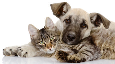 Fully Stocked PETS STORE Business +FREE Domain £300+ bonuses included