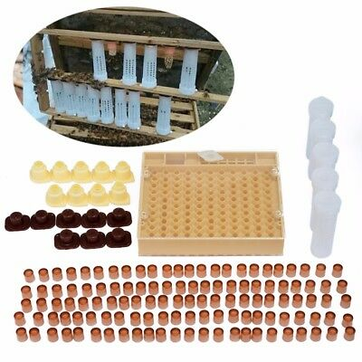 Complete Bee Queen Rearing Cupkit Box System Cage d'apiculture 120 Cell Cups Kit