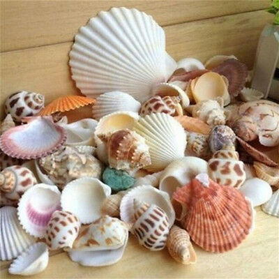 100g Beach Mixed SeaShells Mix Sea Shells Shell  Craft SeaShells Aquarium IU