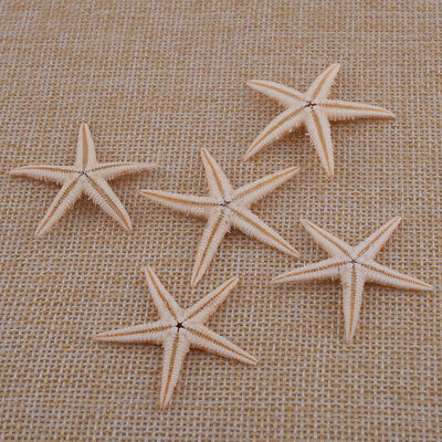 20x Starfish Shell Beach Sea Star Crafts for Home Aquarium Decorations Landscape