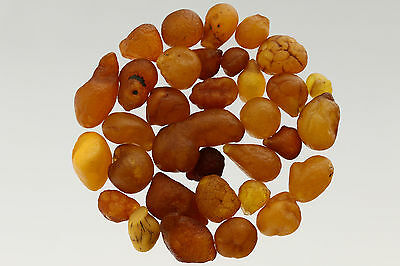 Lot of 34 Natural Raw Rough Rare Drops Nugget Genuine BALTIC AMBER 15g s70202-21